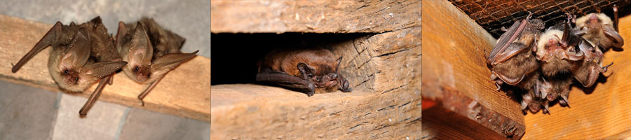 bat surveys in West Yorkshire