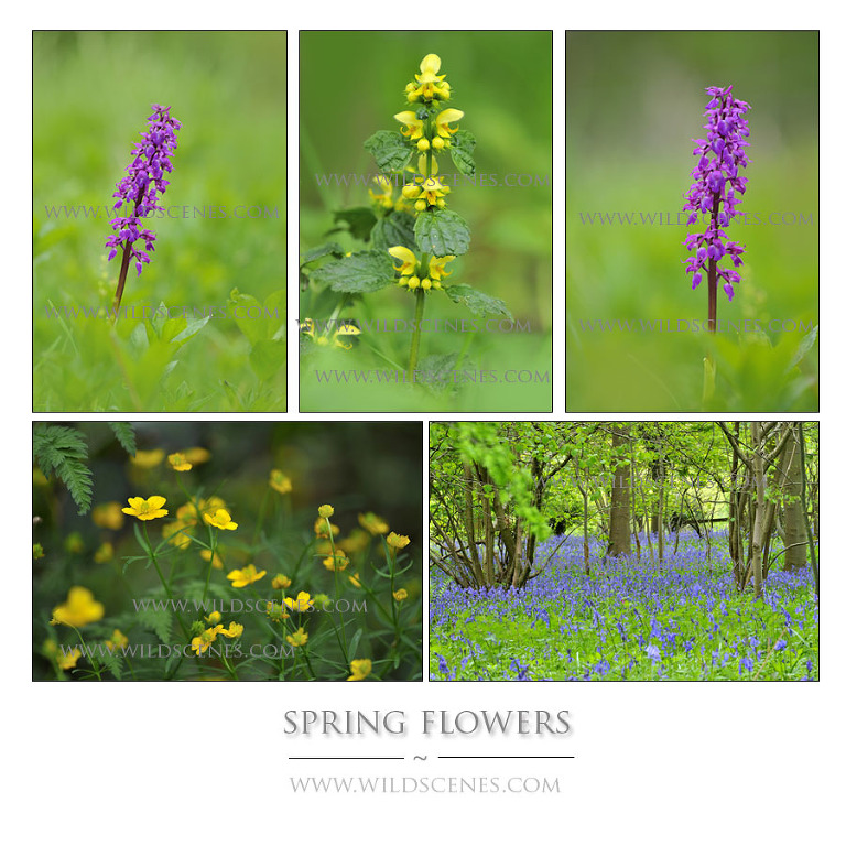 spring wild flowers West Yorkshire