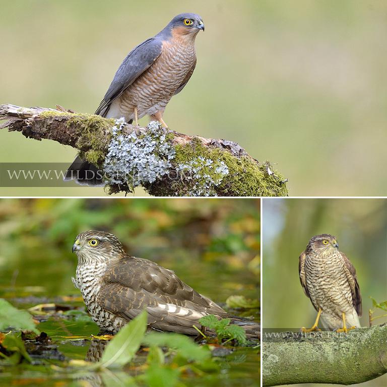 West Yorkshire wildlife photographer