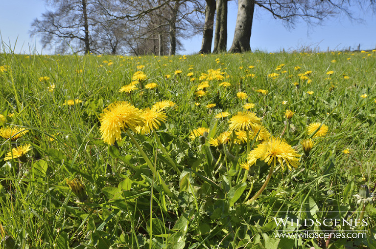 wild flower photography
