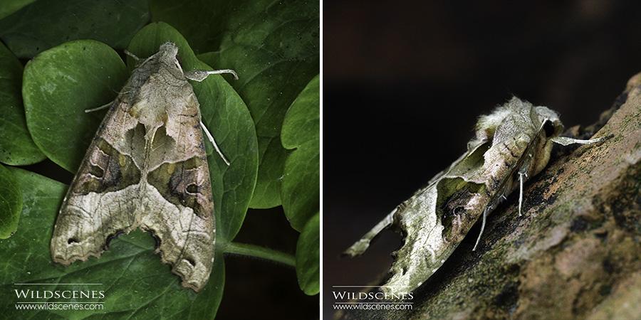 Angle shades moth macro photography