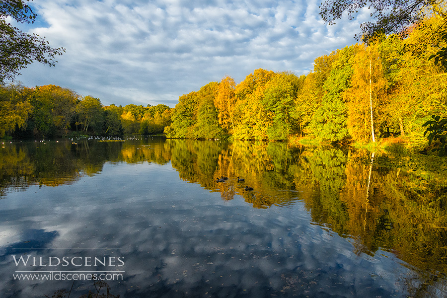 autumn colours at Nostell Priory NT