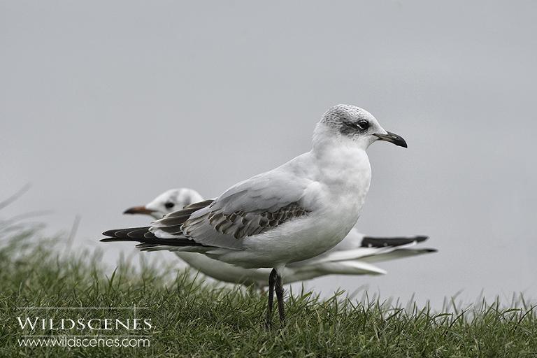 Yorkshire east coast bird photography