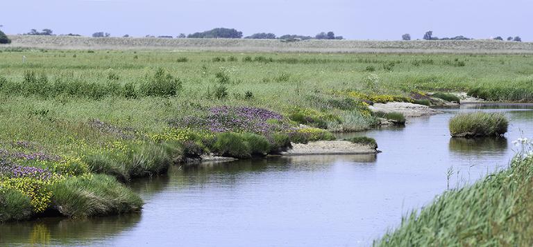 wader habitat Texel