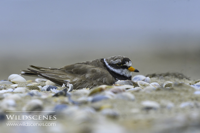 bird photography on Texel