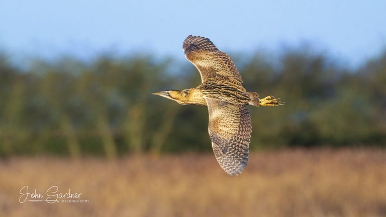 bitter in flight, Yorkshire